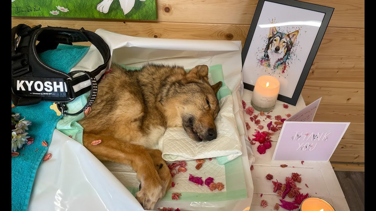 Download MY DOG DIED - PUTTING MY DOG TO SLEEP - EUTHANASIA