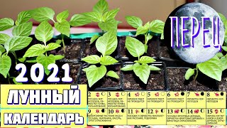 Сажайте перец в этот день урожай будет огромным! Лунный календарь посадки перца на рассаду 2021