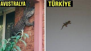 Avustralya 39 Ya Gitmemek Cin 10 Tehlikeli Neden