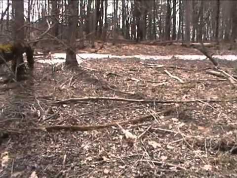 the chairback pond bigfoot encounter doovi