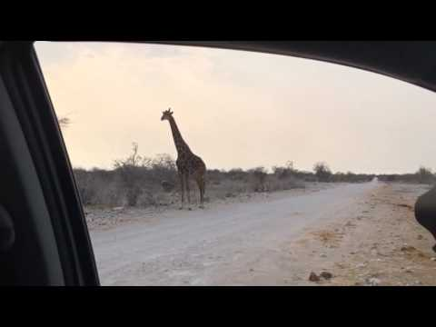 Thumbnail: Shooting Giraffes (with a camera) in Etosha National Park
