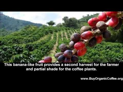 Organic Brands of Coffee