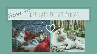 How to have Cats that get along with each other