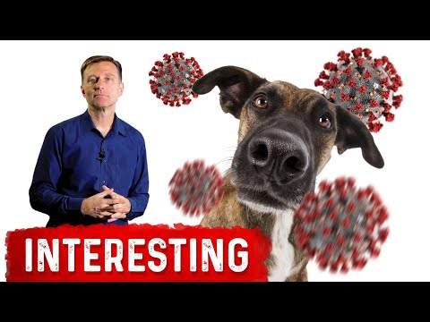 Dogs Can Smell Covid-19 Infection