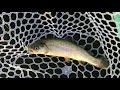 プールトラウト@しらこばと水上公園 Pool Trout Fishing