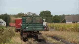 Mais häckseln 2012 im Oderbruch