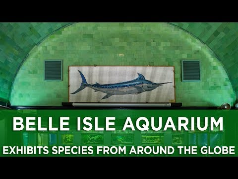 Belle Isle Aquarium exhibits species from around the globe
