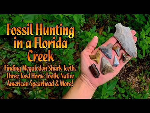Fossil Hunting In A Florida Creek For Megalodon Shark Teeth | I Found An Arrowhead / Spearhead!