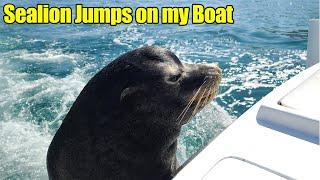 Sealion Jumps on My Boat & Beautiful Underwater Worlds