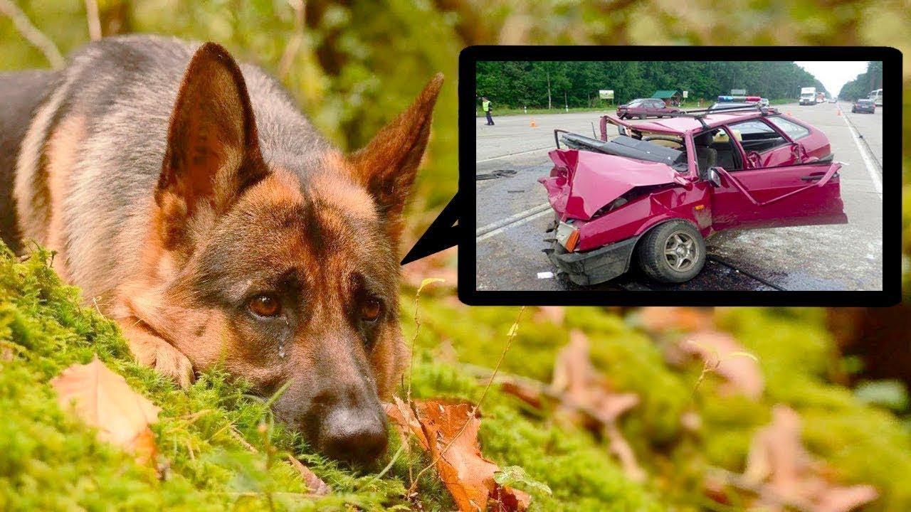 وجد الناس هذا الكلب في الغابة ، وقد شعروا بالصـ ـدمة عندما عرفوا قصته