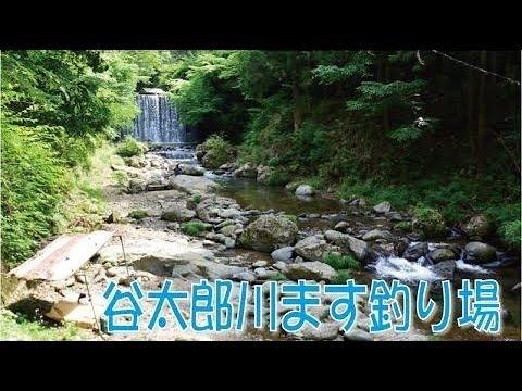 太郎 釣 谷 場 ます 川