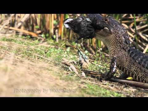 Viera Wetlands Slideshow