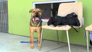Bono A1185930 - Bound Angels Shelter Angel Video