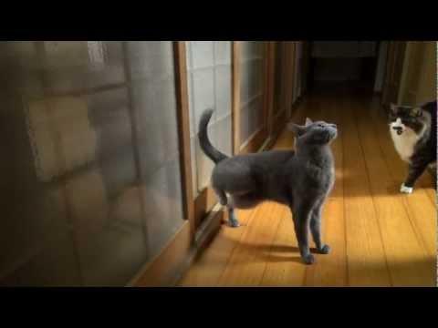 cute Cat knocks on door with her feet :D