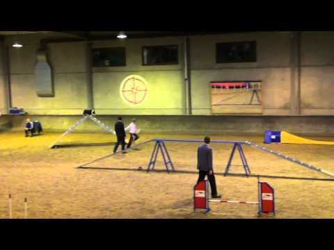 8th international sheltie agility competition