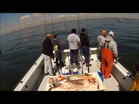 NYC Striped Bass and Bluefish Blitz - Sound Bound Charters - 4/30/16