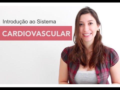 Sistema Cardiovascular 1/6: Introdução | Anatomia e etc.