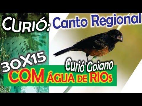 #27 Canto Regional Do Curió Goiano Com 30X15 Minutos De Som De água De Rio