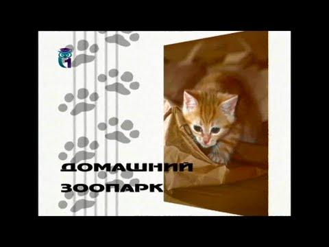 Вопрос: Кошки любят хозяев или просто их используют Какие примеры?
