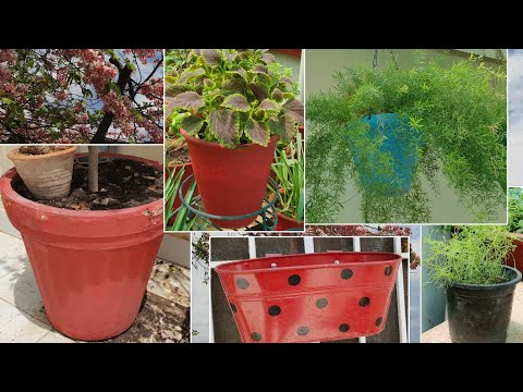Best Pot for Plants ?|| Best Container For Plants || What Are The Different Types of Planters / Pots