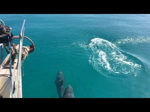 Over de Grand Bahama Bank naar Allens Cay