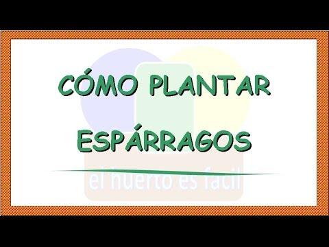 como plantar esparragos - youtube