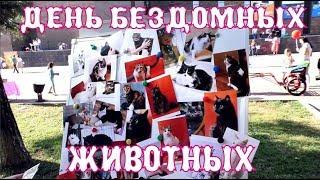 Фестиваль День Бездомных животных Ростов-на-Дону! The Alice Twins #25