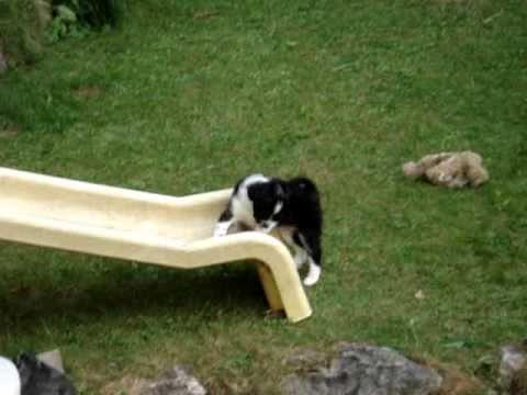 Puppy Power Lustige Welpen Bande Frühling 2007 Rutschen Youtube