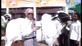 Deoni Animal Selection Annadata Etv film