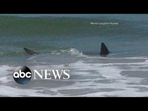Shark Attacks Off the Coast of North Carolina |  ABC World News Tonight With David Muir | ABC News