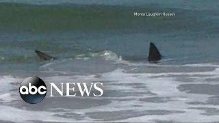 Shark Attacks Off the Coast of North Carolina |  ABC World News Tonight With David Muir | ABC News