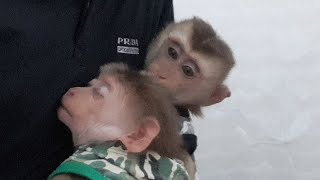 Monkey Baby Drinks Milk Before Going To Bed With Dad