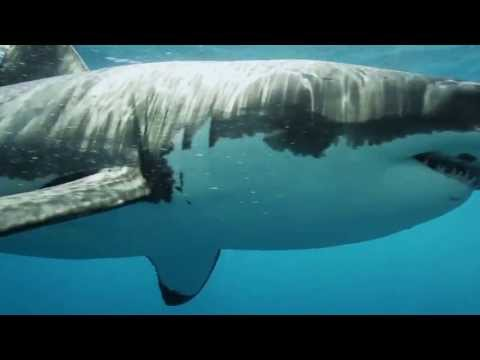 Overfishing - Revolution World Issue
