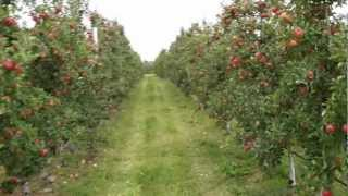 092612vlog - Fruiting Wall Topaz Apple