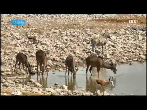 다큐 오늘 - 사막, 물의 전쟁