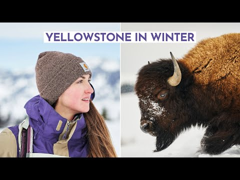 Surviving Winter in Yellowstone National Park *I can't believe we saw this!!*