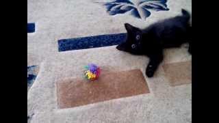 Шок! Кошка напала на оператора
