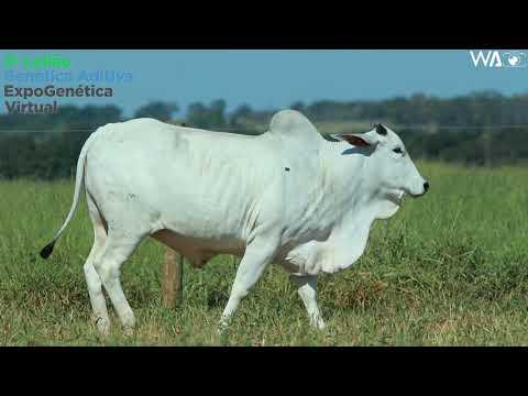 LOTE 22 - REMC A 2265 - 3º Leilão Genética Aditiva Expogenética 2020