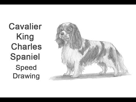 Cavalier King Charles Spaniel Time-lapse / Speed Drawing