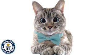 She's the most popular cat on Instagram - Nala - Guinness World Records