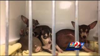 Home where dozens of dogs found to be condemned