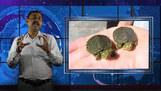 कछुओ के बच्चो को क्या खिलाये    Turtle    Tortoise Baby Food    Dr Nagender Yadav