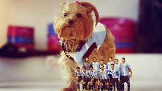 The Dog And The Soccer Player--photo Montage