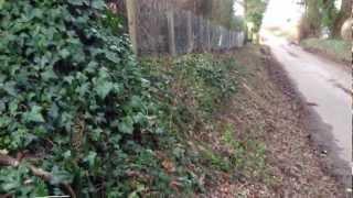 Rabbit Proof Fencing Berkshire