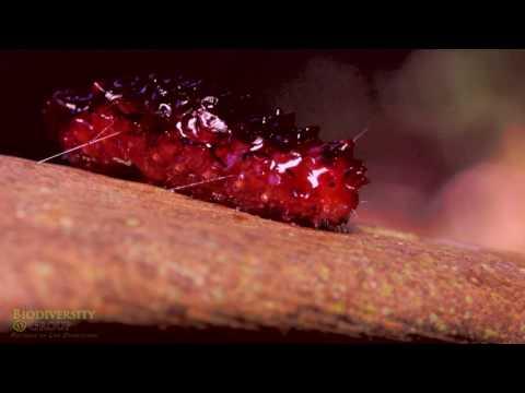 Jello Caterpillar Falls Apart