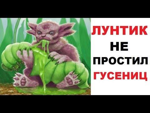 Лютые приколы. Лунтик НЕ простил гусениц!!!