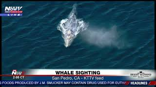 WHALE SIGHTING: In San Pedro, CA on President