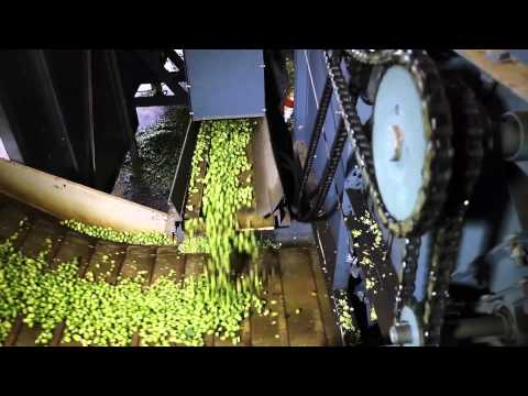 Hops from Hallertau - HD Long Version russian