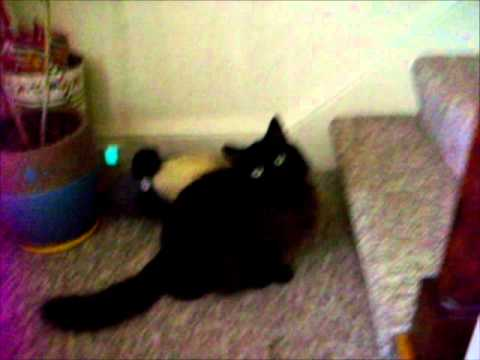 Black pussy for you Booty Shakerz from YouTube · Duration:  1 minutes 2 seconds