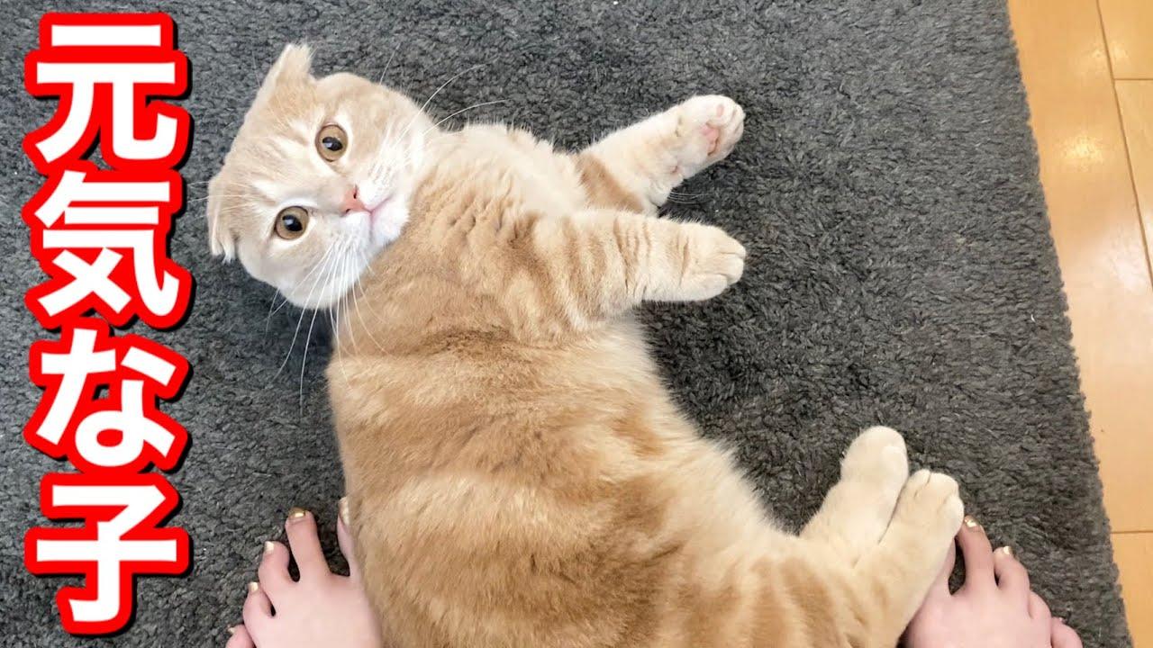 全く動かない兄猫とよく動く短足猫の日常